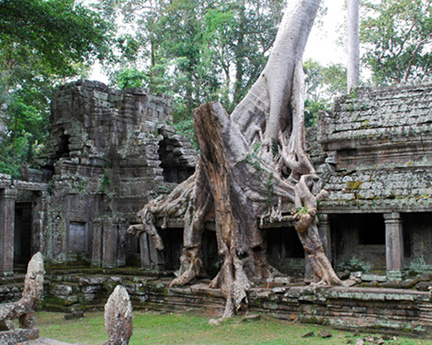 Lara-Croft-Cambodia-Tree