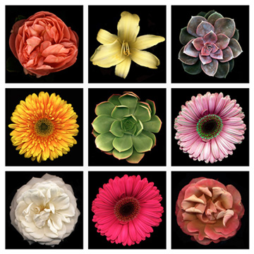 flowers-in-a-grid-1313363