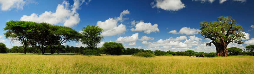 panorama-baobab-tree-with-clouds-0720-0723-adjusted-12